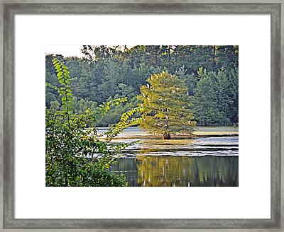 Egret Tree Framed Print