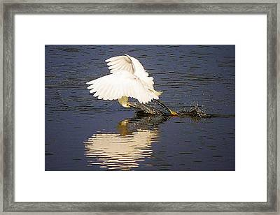 Egret With A Heart Reflection Framed Print by Paulette Thomas