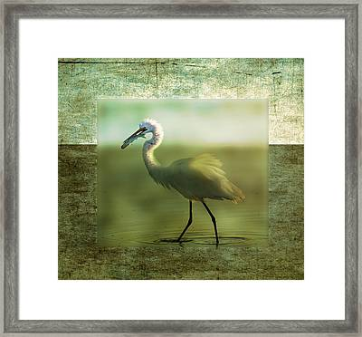 Egret With Fish Framed Print