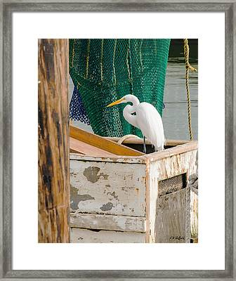 Egret With Fishing Net Framed Print