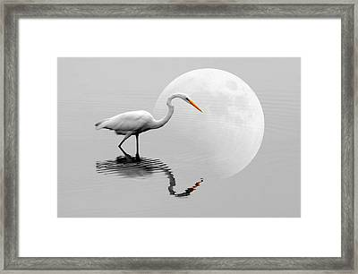 Egret With Moon  Framed Print by Diana Angstadt