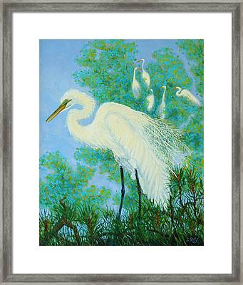 Egrets In Rookery - 20x16 Framed Print