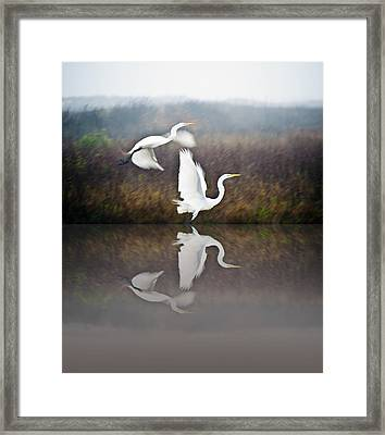 Egrets In The Fog Framed Print