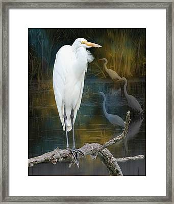 Egrets Framed Print by John Kunze