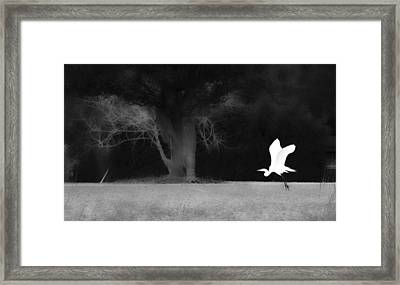 Framed Print featuring the photograph Egret's Shadow by Frank Bright