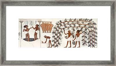 Egypt Grape Pressing Framed Print by Granger