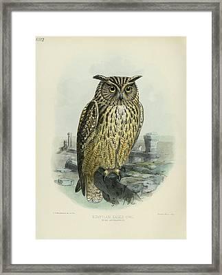 Egyption Eagle Owl Framed Print by Rob Dreyer