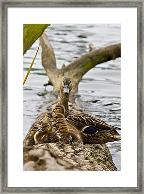 Eight Beaks But Nine Ducks Framed Print