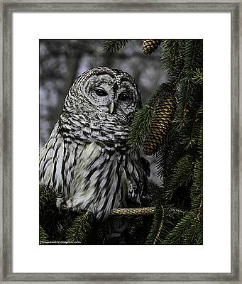 Eight Hoots From The Pine Cone Perch Framed Print