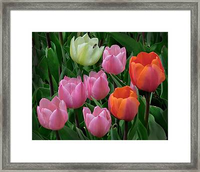 Eight Tulips And One Bee Framed Print