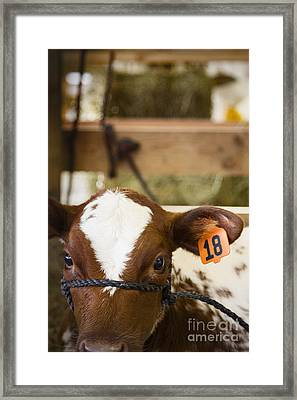 Eighteen Framed Print by Margie Hurwich