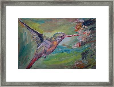 El Colibri Framed Print by Horacio Prada