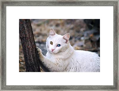El Gato Framed Print by Camille Lopez