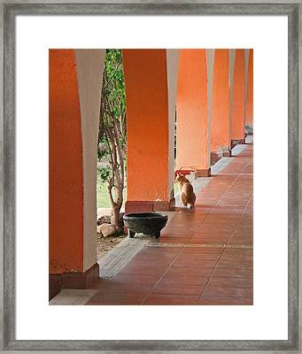 Framed Print featuring the photograph El Gato by Marcia Socolik