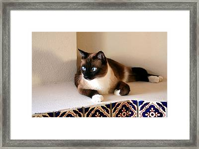 El Gatto Framed Print
