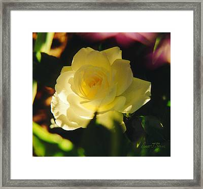 El Salto Rose - Lemonwhippedcream One Framed Print
