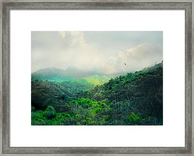 El Yunque National Rain Forest Framed Print by Diana Angstadt