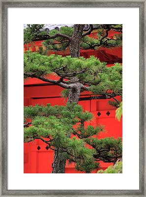 Elaborately Sculpted Pine Trees Framed Print by Paul Dymond