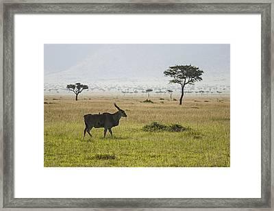 Framed Print featuring the photograph Eland In Masai Mara by Antonio Jorge Nunes