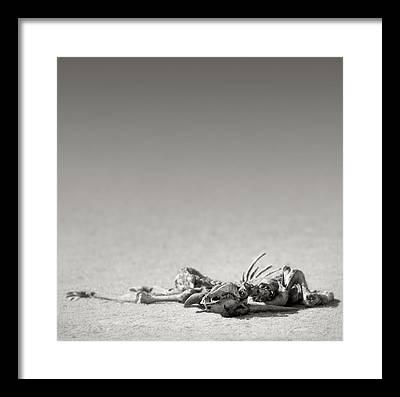 Carcass Framed Prints