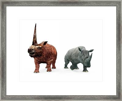 Elasmotherium And Rhino Compared Framed Print by Walter Myers