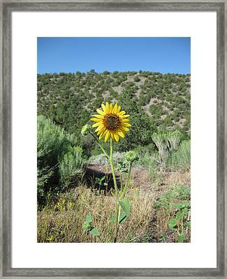 Elated Sunflower Framed Print