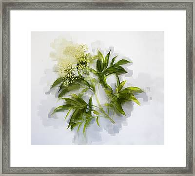 Framed Print featuring the photograph Elderberry  by Linde Townsend