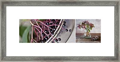 Elderberry Framed Print by Nailia Schwarz