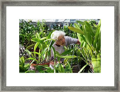 Elderly Woman Examining Plants Framed Print