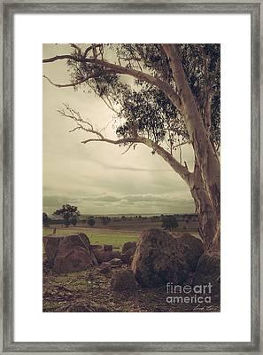 Eldorado Gumtree Framed Print
