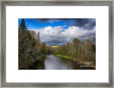 Electric Aspens Framed Print