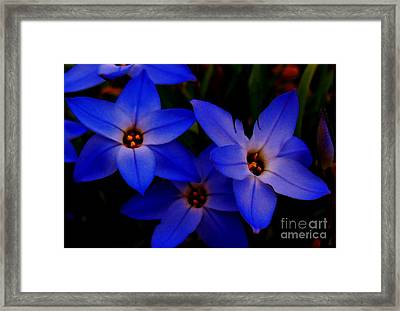 Electric Blue Framed Print by Sharon Costa