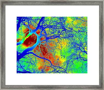 Electric Framed Print by Cathy Jacobs