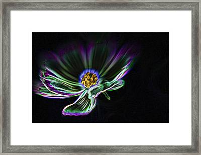 Electric Daisy Framed Print by Scott Campbell