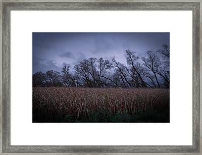 Framed Print featuring the photograph Electric Forest by Jason Naudi Photography