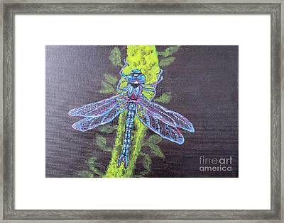 Framed Print featuring the painting Electrified Blue Dragonfly by Kimberlee Baxter