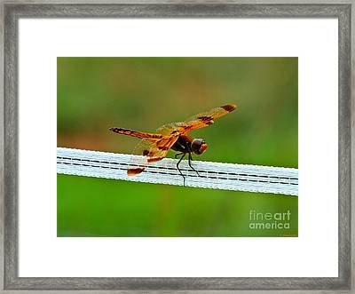 Electrifying Framed Print by Christy Ricafrente