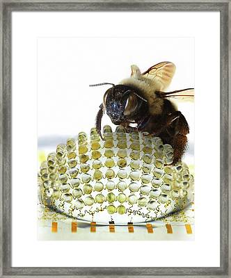 Electronic Compound Eye With Bee Framed Print by Professor John Rogers, University Of Illinois