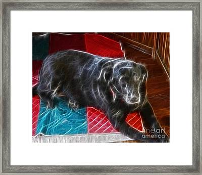 Electrostatic Dog And Blanket Framed Print by Barbara Griffin