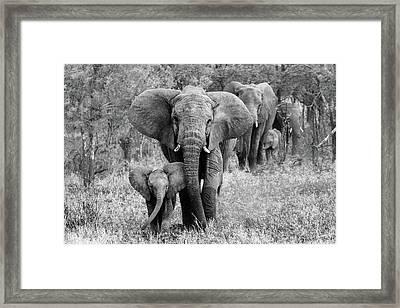 Elefamily Framed Print
