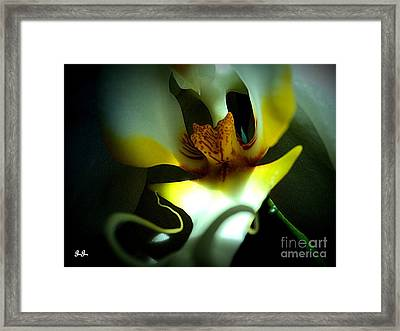 Framed Print featuring the photograph Elegance In White by Geri Glavis
