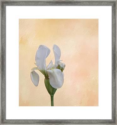Elegance In White Framed Print by Kim Hojnacki