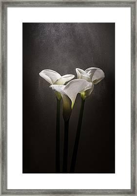 Elegance Framed Print by Ivan Vukelic