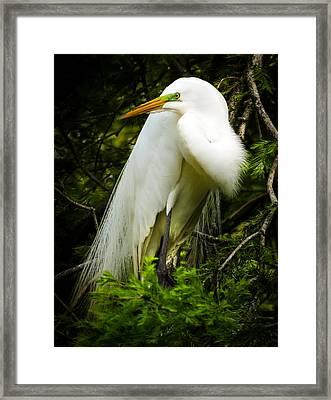 Elegance Of Nature Framed Print