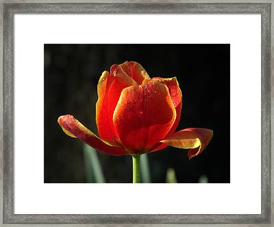 Elegance Of Spring Framed Print by Karen Wiles
