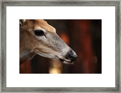 Elegance Framed Print by Rita Kay Adams