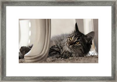 Framed Print featuring the photograph Elegance by Silke Brubaker