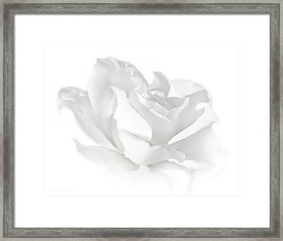 Elegance White Rose Flower Framed Print by Jennie Marie Schell