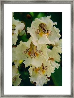Elegant Beauty Framed Print