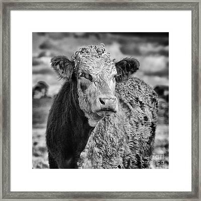 Elegant Cow Framed Print